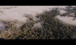 Ayı Paddington: Teaser Fragman (Türkçe Dublajlı)
