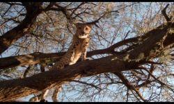 Safari Macerası: Fragman (Türkçe Dublajlı)
