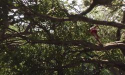 Orman Çocuğu: İlk Fragman (Türkçe Dublajlı)