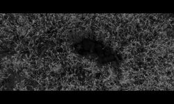 Buğday: Fragman