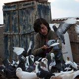 Güvercin Filmi Fotoğrafları