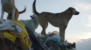 İstanbul sokaklarında yaşayan üç sokak köpeğini odağına belgesel Stray'den fragman yayınlandı