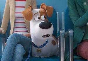 Sevilen animasyon The Secret Life of Pets'in devam filminden ilk fragman!