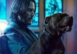 Lionsgate tarafından yeşil ışık alan John Wick 5, dördüncü filmle birlikte çekilecek