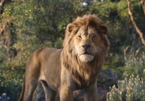 Moonlight'ın yönetmeni Barry Jenkins, The Lion King'in devam filmini çekecek