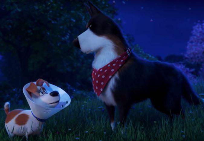 5 Haziran'da vizyona girecek olan The Secret Life of Pets 2'den yeni fragman!