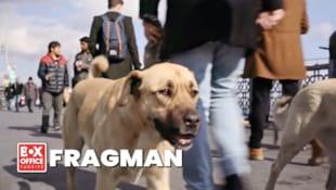 Filmi Stray   Altyazılı Fragman