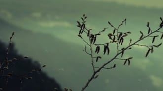 Asfalt Çiçekleri Filmi Fragman