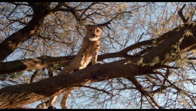 Safari Macerası Filmi Fragman (Türkçe Dublajlı)